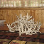 Antlers from Trophy Bucks-Ohio Lodging